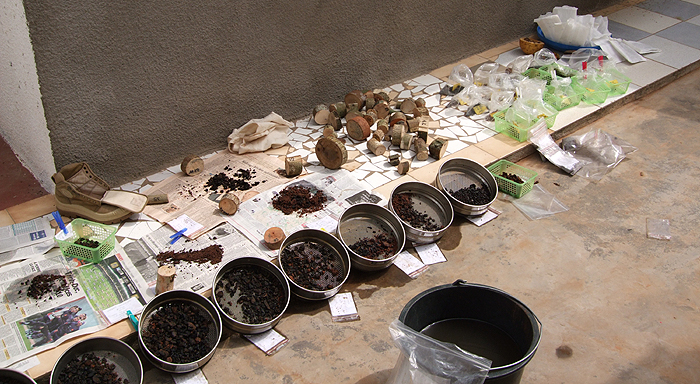 Archaeobatanical samples from S-Cameroon